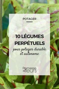 Connaissez-vous les légumes perpétuels ou légumes vivaces ? Nous vous les présentons. Cultivez-les au potager !