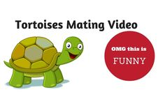 Tortoises Mating Video - OMG you have to see kids reaction! Taking my kids down to the nursery to feed the animals took an amusing turn when the tortoises start mating! Now we know what sounds tortoises make! Mommy Videos, Turtle Facts, Mommy Quotes, Tortoises, Your Music, Ocean Life, Say Hello, The Funny, Laughter