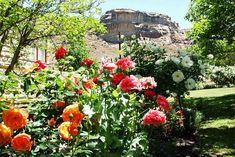 Iona Cottage - Clarens Accommodation. Sandstone Wall, Queen Room, West Coast Scotland, Self Catering Cottages, Free State, Waterfall, Plants, Waterfalls, Plant