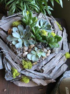 Concor Airplant-3-4-Tillandsia Air Plants-Terrarium Air Plants-Terrarium Supplies-Home Decor-Beach Wedding Decor-Terrarium Plants