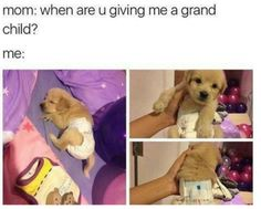 Awwwww only pinning for this baby puppy awwww