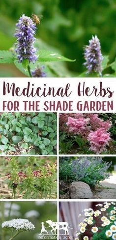 Think you can't grow herbs in your garden because of too much shade? Try growing these medicinal herbs in your shade garden. #garden #herbs #herbalmedicine #homesteading #reformationacres