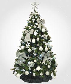 Sapin blanc et argent on aime particuli rement les - Difference entre pin et sapin ...