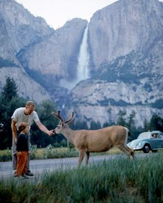 A father and son feed a deer at Yosemite National Park, 1962