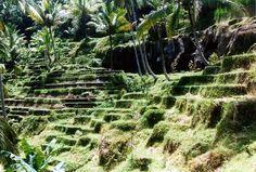 Gunung Kawi rice paddies, Bali
