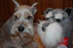 Cooper Inglis the inspiration for our #Schnauzer # golf club cover.