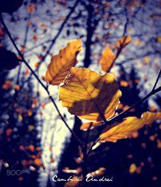 Yellow particles - Autumn feeling, Constanta, Romania Constanta Romania, Autumn Feeling, Dandelion, Yellow, Flowers, Plants, Dandelions, Plant, Taraxacum Officinale