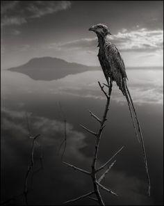 Africa's Lake Natron Turns Animals into Stone - My Modern Metropolis