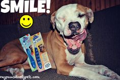 Help Your Dog Have a Healthy Smile With Zututh | Review and Giveawy | Pawsitively Pets