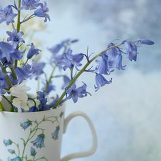Cup of Bluebells