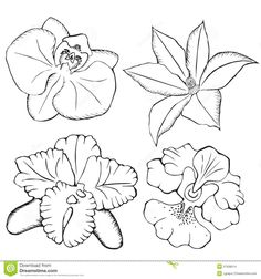 Illustration about Orchids. contour flowers on a white background. Orchid Drawing, Floral Drawing, Orchid Tattoo, Flower Tattoos, Free Images For Blogs, Orchid Show, Outline Drawings, Blue Orchids, Mom Tattoos