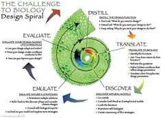 The biomimicry design cycle