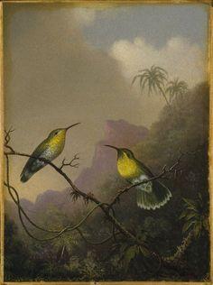 Martin Johnson Heade, Two Hummingbirds: Copper-tailed Amazili * 1865-1875 on ArtStack #martin-johnson-heade #art