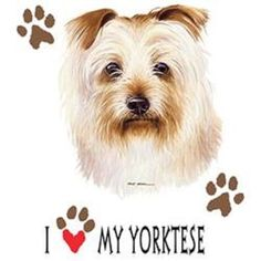 I Love My Yorktese Dog HEAT PRESS TRANSFER for T Shirt Sweatshirt Fabric #917g #AB