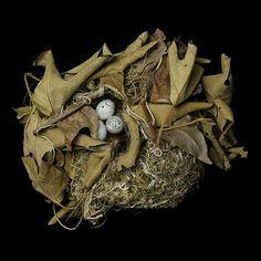 Bullocks Oriole nest, by Sharon Beals, via Flickr
