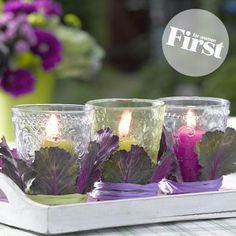 Flowering Kale Candle Cuffs