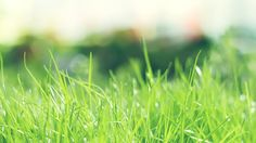 Green Grass Wallpaper  Android Apps on Google Play 1024×768 Grass Wallpaper (35 Wallpapers)   Adorable Wallpapers