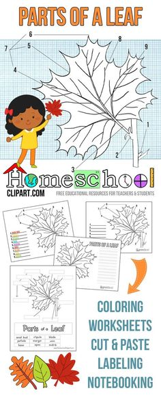 Free Parts of a Leaf Science Printables: http://thecraftyclassroom.com/2015/09/17/parts-of-a-leaf-printables/
