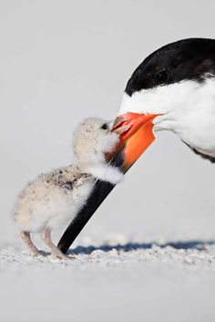Apr 2020 - Animals of all shapes and sizes. See more ideas about Animals, Animals beautiful and Cute animals. Pretty Birds, Beautiful Birds, Animals Beautiful, Beautiful Nature Photos, Animals Amazing, Pretty Animals, Nature Animals, Animals And Pets, Wildlife Nature
