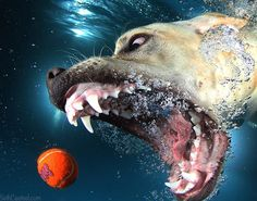 Jump in the pool (and giggle uncontrollably) with 'Underwater Dogs'  Read more: http://www.mnn.com/family/pets/blogs/jump-in-the-pool-and-giggle-uncontrollably-with-underwater-dogs?utm_source=Freekibble&utm_medium=Quiz&utm_campaign=Oct162014#ixzz3GKVeoaku