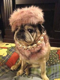 pets fashion - Pesquisa Google