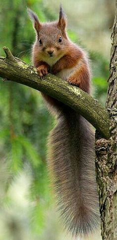 You are in the right place about Rodents cartoon Her Animals And Pets, Funny Animals, Cute Animals, Squirrel Pictures, Animal Pictures, Woodland Creatures, Cute Creatures, Cute Squirrel, Squirrels