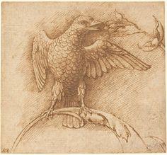 Andrea Mantegna, Uccello appollaiato su un ramo con frutto, anni sessanta del XV…