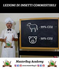 🦗 MasterBug Academy: Lezioni di Insetti Commestibili - Vantaggi e Curiosità sul Mondo degli Insetti da Mangiare. #MasterBug #InsettiComestibili Chalkboard Quotes, Art Quotes
