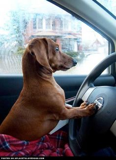 Move I'm driving