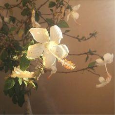 New post on bellsibop Flower Aesthetic, Aesthetic Photo, Aesthetic Pictures, Beige Aesthetic, Arte Peculiar, Under Your Spell, No Rain, New Energy, The Villain