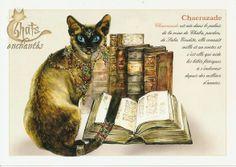Carte postale Chaerazade de Severine Pineaux. Chats féériques.