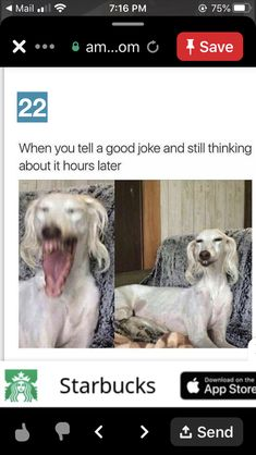 Good Jokes, Funny, Good Funny Jokes, Ha Ha, Hilarious