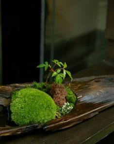 Lovely, but check the website for even lovelier bonsai