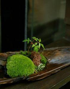 Unique bonsai kokedama Ball Ideas for Hanging Garden Plants selber machen ball Ikebana, Indoor Garden, Garden Plants, Indoor Plants, Moss Plant, Deco Nature, Garden Inspiration, Houseplants, Container Gardening