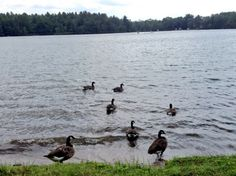 Look who we spotted by the lake. Nature at Silver Lake is awesome! #geese #lovenature #silverlake