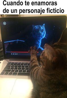 21 cat memes that will make dog lovers laugh - Memes of cats. memes of mininos. animal memes Memes of cats. memes of mininos. animal memes Memes o - Funny Spanish Memes, Funny Cat Memes, Dog Memes, Funny Cats, Comebacks Memes, Relationship Memes, Offensive Memes, Animal Memes, Best Memes