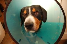 5 Comfy Alternatives to the Dreaded Cone of Shame. Your Dog will thank you for reading this :o)