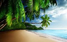 Nature n beach hd wallpeper tropical beach paradise ultra desktop wallpaper nature beach hd wallpapers . nature n beach hd wallpeper wallpaper Palm Trees Beach, Nature Beach, Video Background, Hd Wallpaper, Wallpapers, Slot, Paradise, Coconut, Tropical