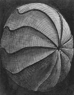 Peter Randall Page Shell Drawing, Form Drawing, Peter Randall Page, Gcse Art Sketchbook, Still Life Artists, Shading Techniques, Abstract Drawings, Sketchbook Inspiration, Patterns In Nature