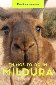 These are the best things to do in Mildura Victoria! Click pin through to post for itinerary and fabulous photos. New Travel, Japan Travel, Travel Tips, Travel Plan, Travel Advice, Australia Travel Guide, Australia Trip, Visit Australia, Outback Australia