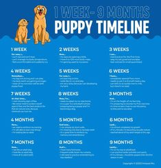 Dog Whelping Box, Whelping Puppies, Puppies Tips, Dogs And Puppies, Dog Weight Chart, Puppy Growth Chart, Dog Chart, Puppy Schedule, Puppy Training Tips