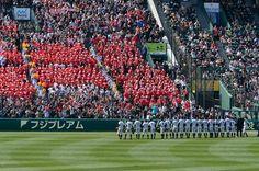 La #photo du jour : le printemps c'est aussi le retour du baseball ! anglo10 #Japan