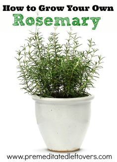 How to Grow Rosemary, including how to plant rosemary seedlings, how to grow rosemary in containers, how to care for rosemary, and how to harvest rosemary.