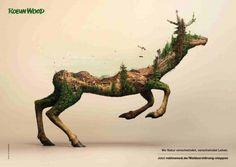 Poster Hirsch Robin Wood