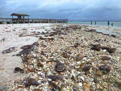 Shells upon Shells!!!