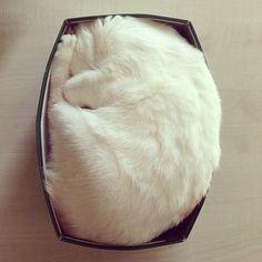 cat + box = zen