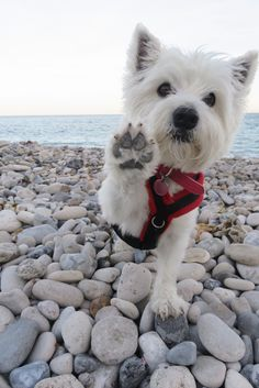 Hi at the beach Wooof Wooof❤❤❤