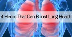 4 Herbs that can Boost Lung Health  It's about time you give some credit to your respiratory system! It's working all day every day as the primary means of getting oxygen into your body; without it, we wouldn't be able to survive...