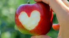 Amazing Love On The Apple Fruit Wallpaper Back Wallpaper