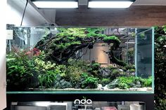 Aquarium Garden, Nano Aquarium, Home Aquarium, Aquarium Design, Planted Aquarium, Aquarium Fish, Saltwater Tank, Saltwater Aquarium, Aquascaping Plants